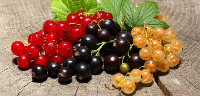 черная, красная и белая смородина сорта