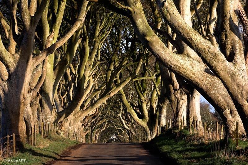 фото таинственный лес северная ирландия граненый стакан