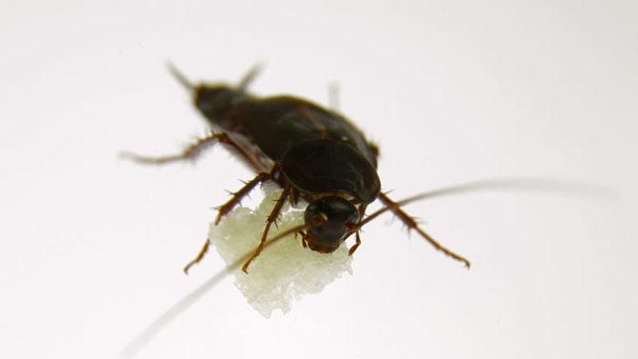 Gândacii ca zahărul.  / Foto: il3.picdn.net