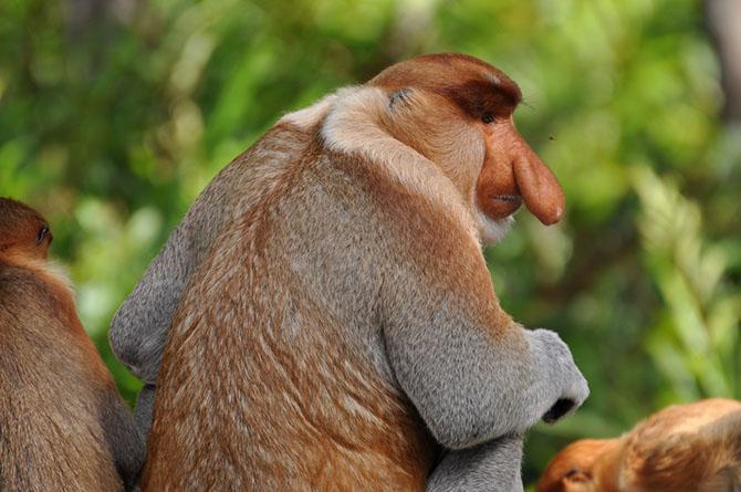 Жертвы диспропорции среди животных