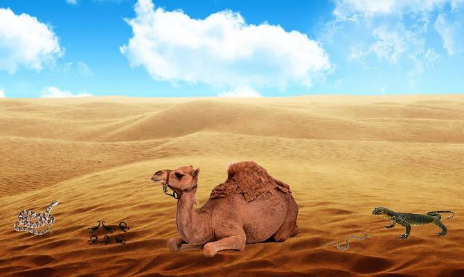 Верблюд, Варан, Змея, Скорпион, Пустыня, Интересные факты о Пустыне