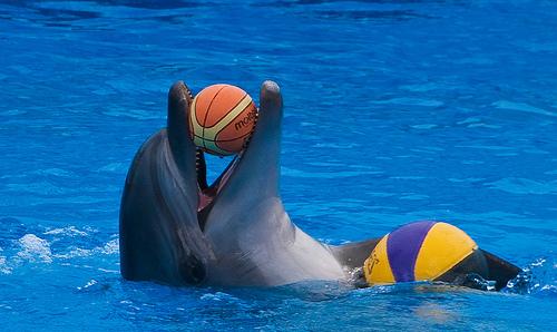 Удивительные и малоизвестные факты о дельфинах