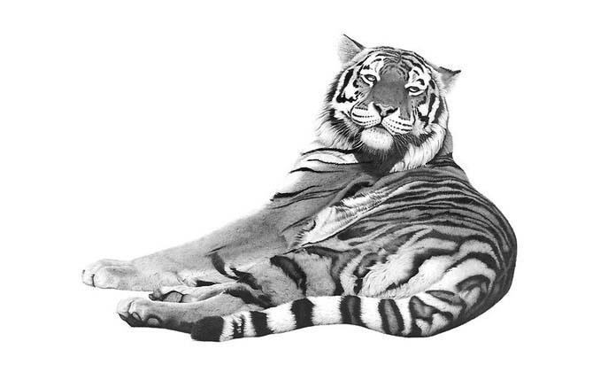 Удивительные графитовые рисунки животных