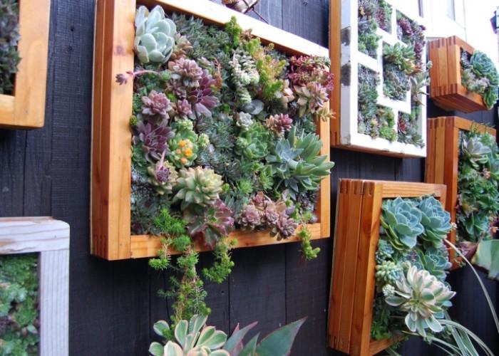 Вертикальное озеленение своими руками — фото