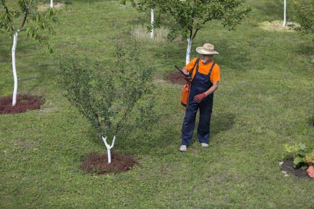 обрабатывать сад от вредителей
