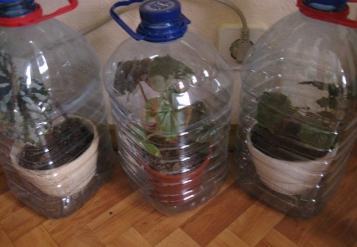 Если растения любят влажную среду, накройте их пластиковыми пятилитровыми бутылками / Фото: i.pinimg.com