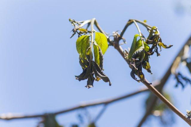 Замерзшая листва на дереве
