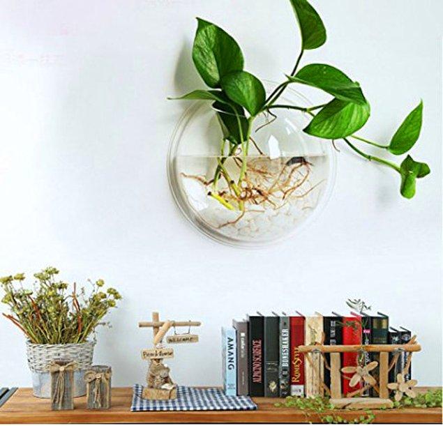 Прозрачный настенный сосуд-горшок для растений! А одновременно можно использовать как аквариум..
