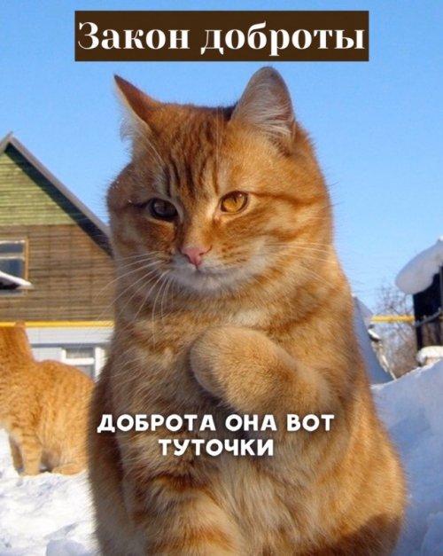 Котоматрица - 4 - Страница 14 Fullsize