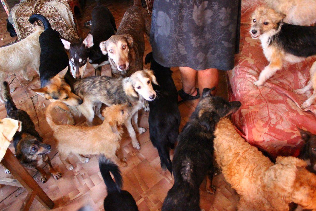 Суд обязал курянку избавиться от 12 собак и 4 кошек в квартире