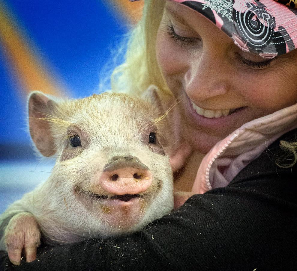 этом смешные картинки про животных и людей самых