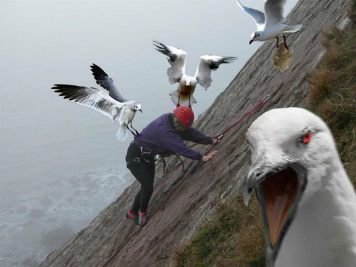 Кажется, птицы хотят меня убить! | Фото: JustGiving.
