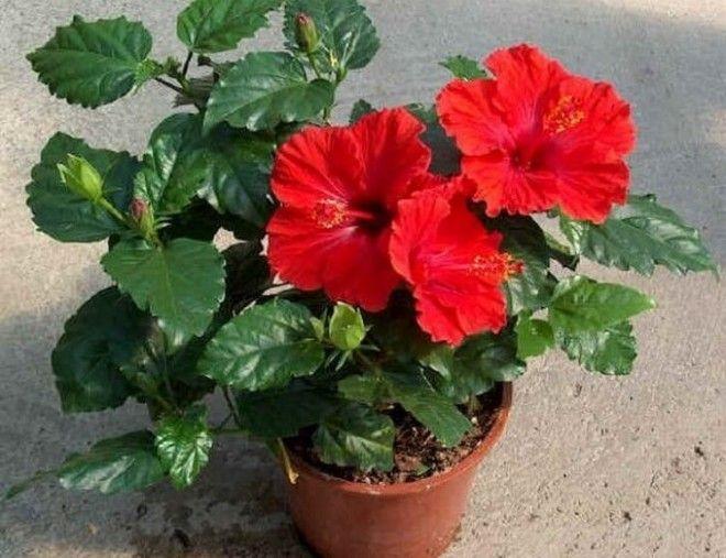 Раскрыт секрет какие 10 цветков принесут счастье и деньги в ваш дом