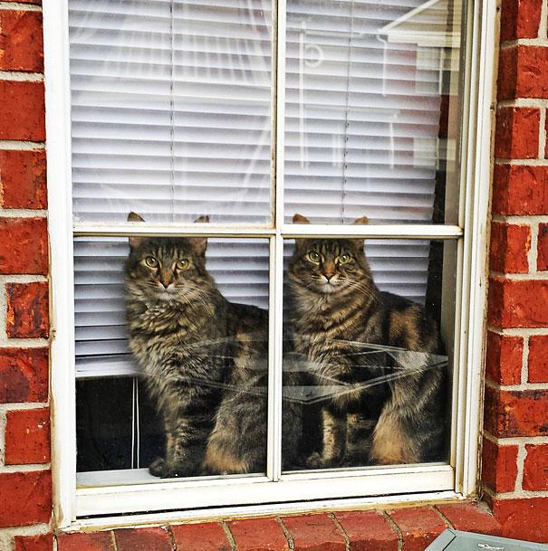Животные-близнецы - 25 очаровательных фото-18