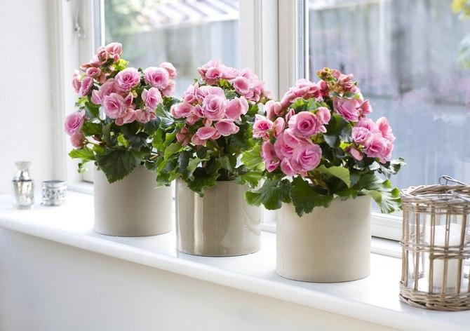 Кашпо – это декоративный контейнер без дренажных отверстий, в который можно поместить самый обычный горшок с растением.