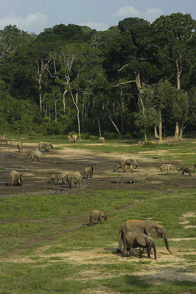 Животные, которых за последние 40 лет стало вдвое меньше
