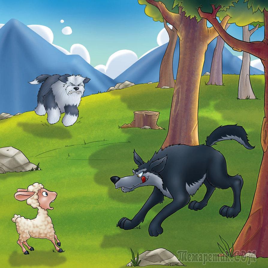 картинки волки овечка помощью правильно выбранной