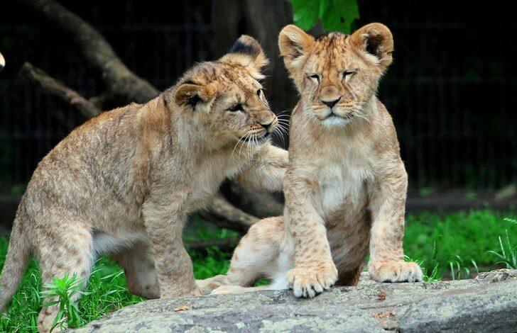 dortmund-zoo