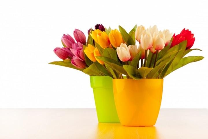 тюльпаны в ярких горшках