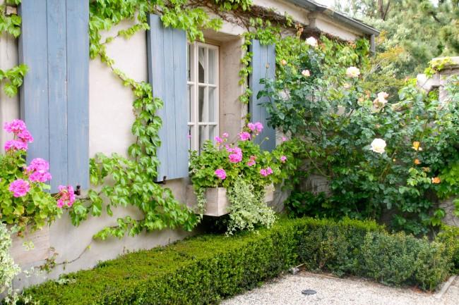 Полуплетистые и плетистые розы просто созданы для украшения фасадов домов