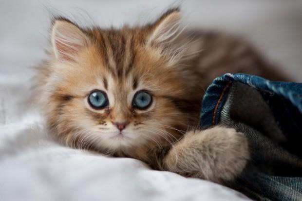 котята самые красивые картинки