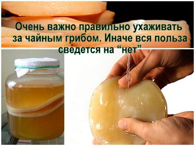 Чайный гриб могут поразить болезни