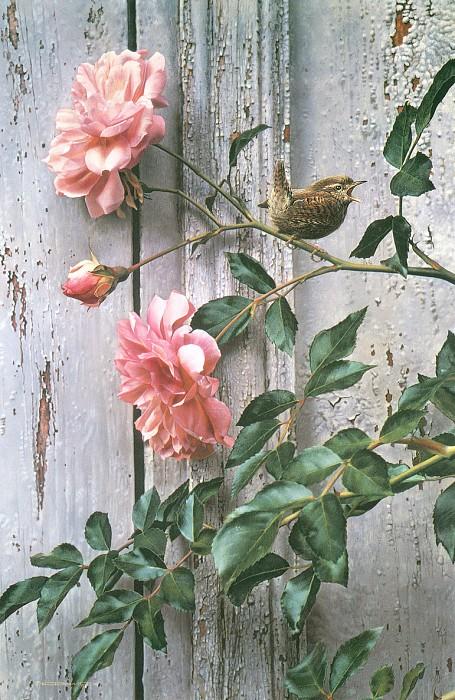 kb Brenders Carl Summer Roses. Карл Brenders