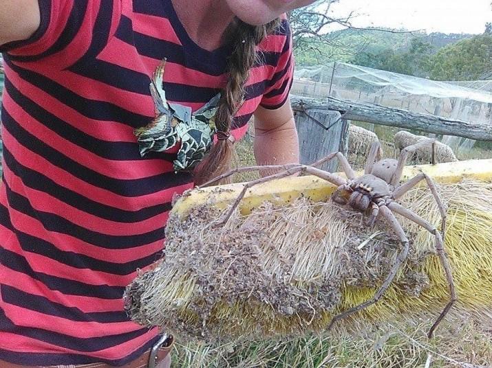 Когда на ферме нашли вот такого монстра австралия, в мире, животные, насекомые, подборка, прикол, юмор