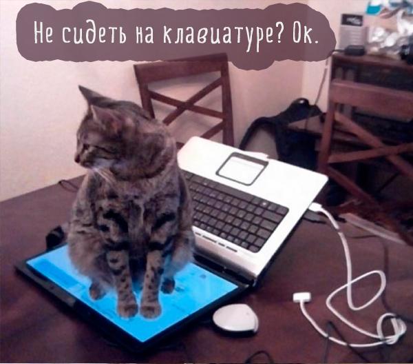 кошка сидит на экране ноутбука