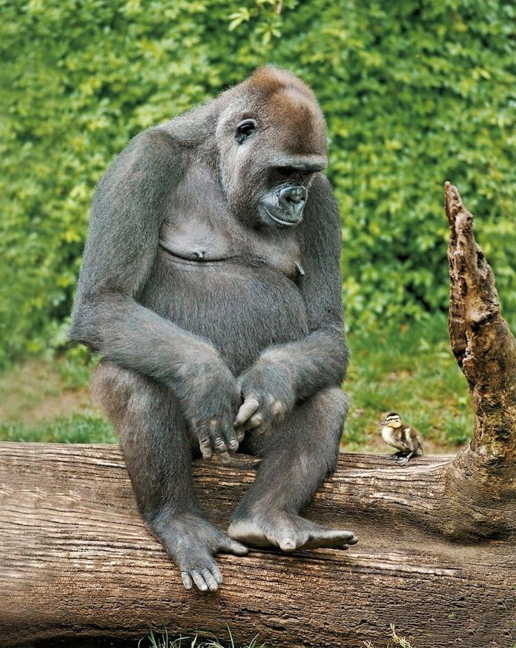 смотреть картинки про животных смешные показывает практика, нельзя