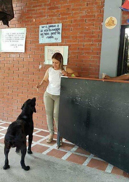 Персонал магазина разрешает собаке *покупать* за листья печенье. деньги, лабрадор, сладости, собака