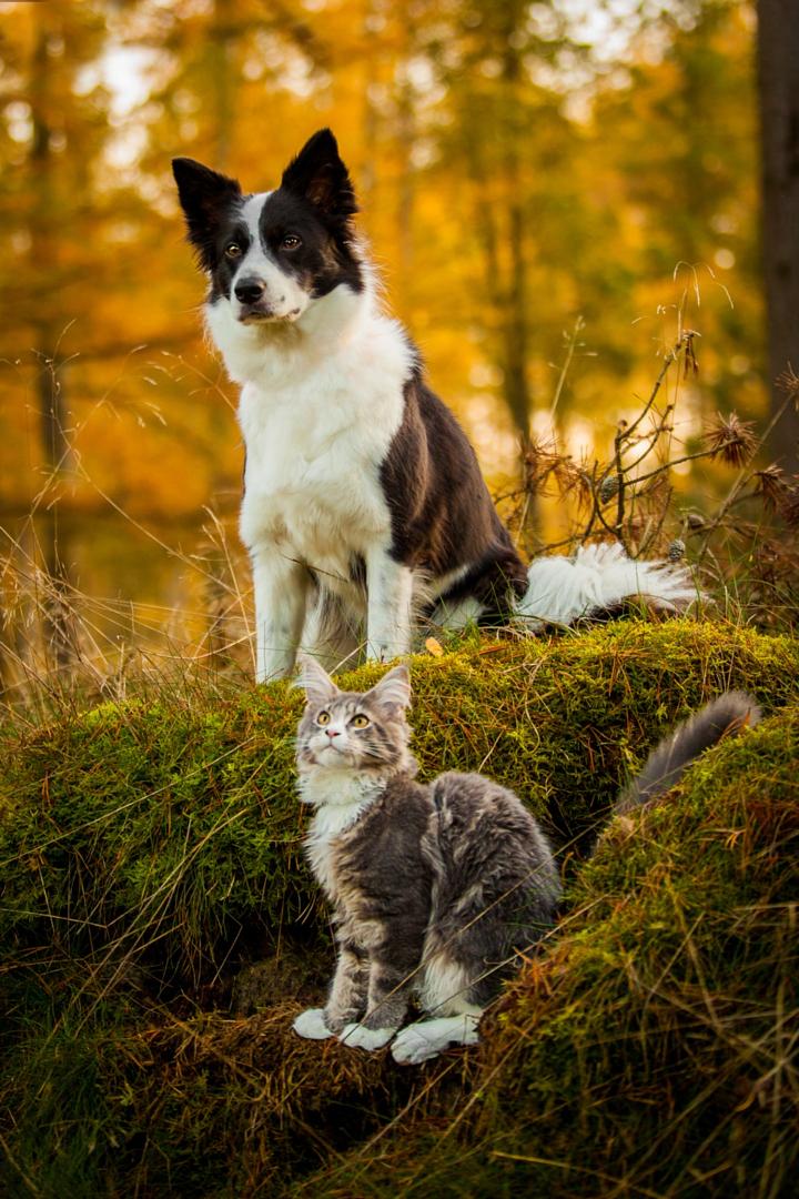 Фотографии собак - 22