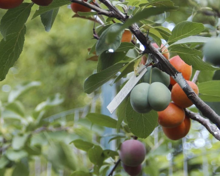 Теперь вы знаете больше Фабрика идей, дерево-сад, интересное, растения, садоводство, факты