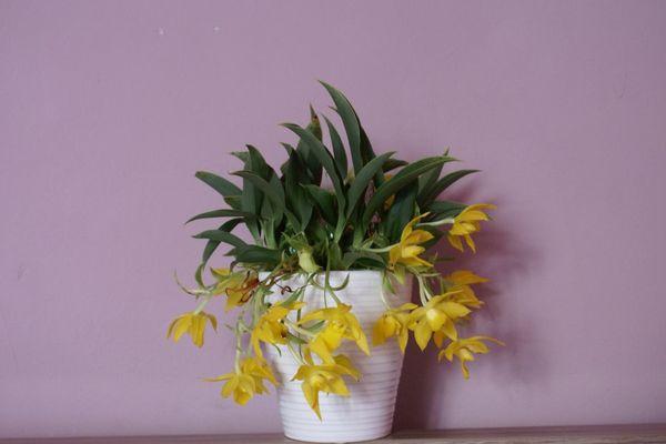 Выращивание орхидеи лучше производить в блоке