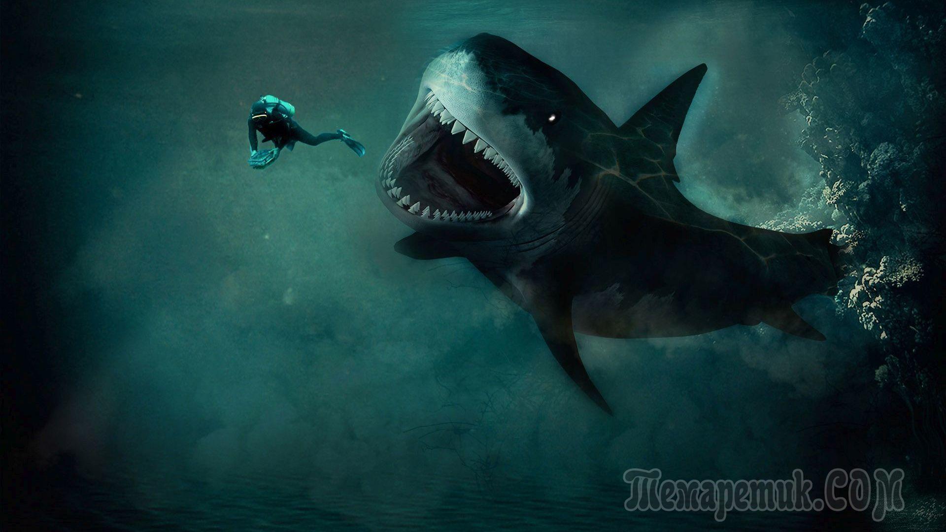 Смотреть К чему снится акула: толкование снов о морских хищниках разными сонниками видео