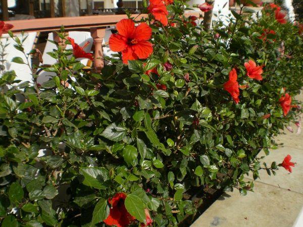 Растение может страдать от вредителей и не цвести