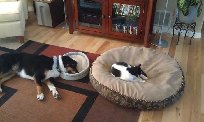смешные фото кошек, приколы с кошками