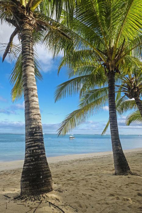 Песчаный пляж с пальмами.