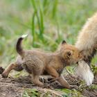 Защитник природы