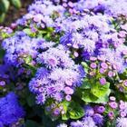 15 декоративных растений, цветущих до глубокой осени