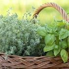 7 табу при выращивании пряной зелени, из-за которых усилия пойдут насмарку