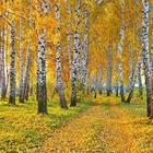 Осень, подскажи... (Cтих)