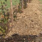 Полезные советы по использованию опилок в огороде