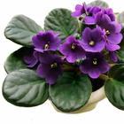 Список растений, которые принесут в ваш дом счастье и любовь