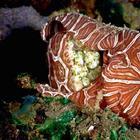 12 самых странных и редких существ, живущих под водой