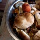 Пирог-пицца с лесными грибами и куриным мясом