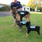 Фотографии щенков в их первый день на службе