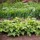 Как понять, что почва на огороде устала, и как ей помочь