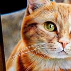 23 рисунка кошек в жанре гиперреализма