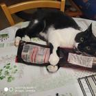 22 кошки, которые ведут себя очень плохо, а иногда странно и это концентрация милой придурошности